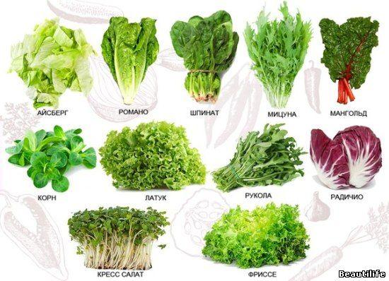 Все виды листового салата